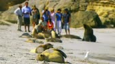 proximidade : Sea-lions on beach with tourists and people in close proximity