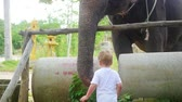 comovente : child feeding the elephant bananas. PHANGAN, THAILAND.