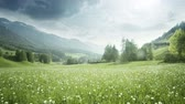 santa magdalena : Field of spring dandelions in Dolomites, South Tyrol, Italy Stock Footage