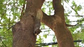 ореховая скорлупа : Squirrel eating nuts on a tree. Upside down