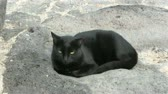 tomcat : black cat siting in the sun Stock Footage