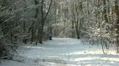 forest : Man walking in a snowy wood. Stock Footage