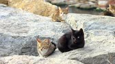 domestic : Cats sitting on the rock