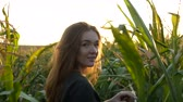 direct : Flirty red-haired girl smiles and goes away through a corn field. Beautiful young woman with blue eyes in khaki sweat shirt at sunset. Agricultural Footage.