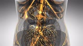 медицина : science anatomy scan of woman heart and blood vessels glowing Стоковые видеозаписи