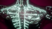 internal : science anatomy scan of woman heart and blood vessels glowing Stock Footage