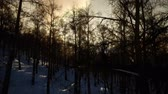 lapponia : Majestic Winter Landscape Glowing by Sunlight