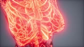 biotechnologie : Blood Vessels of Human Body