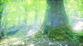buk : Forest of Beech Trees illuminated by Sunbeams