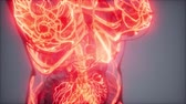 ritmo : Blood Vessels of Human Body