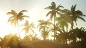 plantas : Silhouette coconut palm trees at sunset Stock Footage
