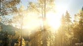 copertina : Sun Shining Through Pine Trees in Mountain Forest