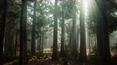 горы : Sequoia National Park under the fog mist clouds