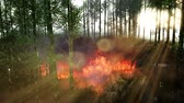 plantas : Wind blowing on a flaming bamboo trees during a forest fire Stock Footage