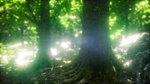 plantas : Sun Light in the Green Forest
