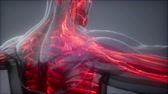 내부의 : Blood Vessels of Human Body