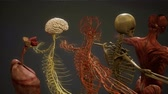 films : Animated 3D human anatomy illustration Stockvideo