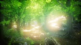 sunlights : Sunbeams Shining through Natural Forest of Beech Trees