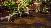 vadi : tropical golden pond with rocks and green plants