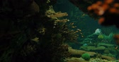 glow : Aquarium Background With Several Fishes And Sharks Stock Footage