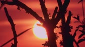 Time Lapse, Close Up, Sunset Through Branches Stockvideo