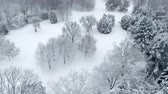 parques : snow covered trees in winter forest, aerial view