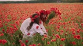 anleihen : Young mother with little daughter collect red poppy flowers in a blossoming field, slow motion Stock Footage