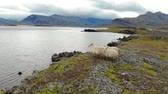 Aerial view of sheep graze on seashore, Iceland