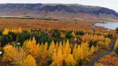 сентябрь : Aerial view of colorful autumn landscape in national park Thingvellir, Iceland