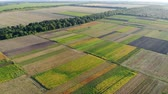 сентябрь : Aerial view of colorful sections of a large field on a sunny day, drone shot Стоковые видеозаписи
