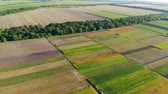 сентябрь : A drone flies over the colorful sections of a large agricultural field Стоковые видеозаписи