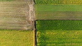 сентябрь : Aerial view from top to bottom multi-colored plots of agricultural field on a sunny day Стоковые видеозаписи