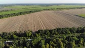 сентябрь : Aerial view of a large agricultural field after harvesting on a sunny day, drone shot