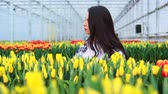 Young woman greenhouse worker collects tulips. Slider shot. Dostupné videozáznamy