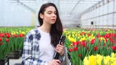 тюльпаны : A female greenhouse worker inspects tulips and enters data into a tablet. Steadicam shot.