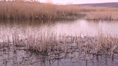 cana : river with the reeds in my village Stock Footage