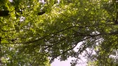 inculto : Trees and branches on blue sky Stock Footage