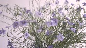 blooming : blue wildflowers Stock Footage