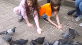 drobky : two little girls, sisters feed pigeons in the Park. children in outdoor