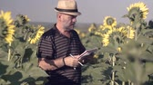 осмотр : Satisfied farmer in a sunflowers field looking at sunflower seeds. The farmer makes notes in his book
