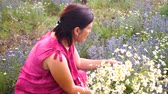 herbívoro : female herbalist woman pick daisy flowers in summer field. Stock Footage