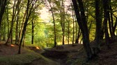 carvalho : Forest detail with and oak trees Stock Footage