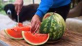 Woman cut watermelon on a wooden table.