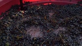 bordo : Winemaking. Mixing cap of grape skins. Steadicam shoot.