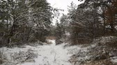 steady shot : Winter Road, Winter Driving Plate. Gimbal steadicam. Stock Footage