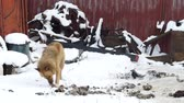 prendedor : Stray dog eating scraps outside, winter, cold