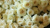 aveludado : Close up shot of a lot of white bouquet of roses from the table at wedding day. Dolly shot.