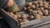 клубень : A man is picking up a potato from the box for landing.
