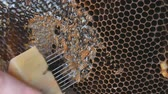 brankář : Hand using a knife to clog honeycombs with honey in a frame. Beekeeper Unseal Honeycomb.