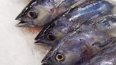 crushed : Fresh fish on Ice moving panning shot Stock Footage
